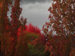 Autumn leaves and gray sky
