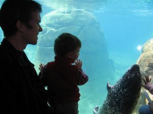 Harbor seal comes to say hi