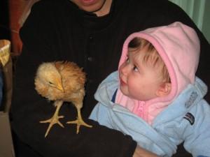 elena_chicken