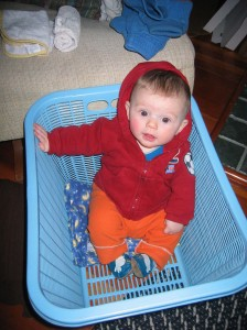 Sylvan in a laundry basket, five months old